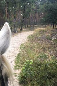paarden09kl