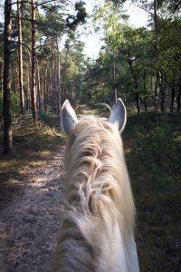 paarden10kl