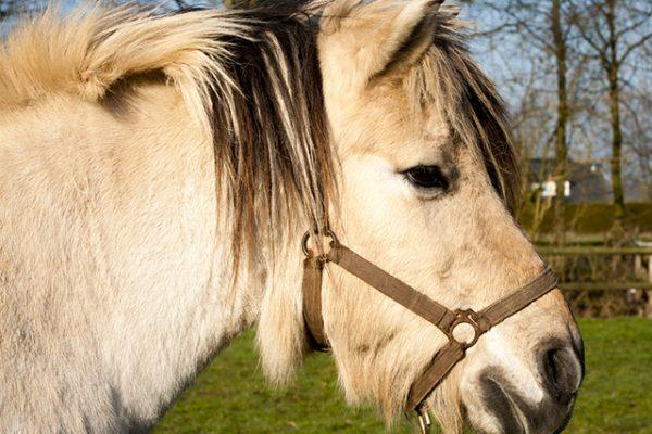 Damakker paardjes