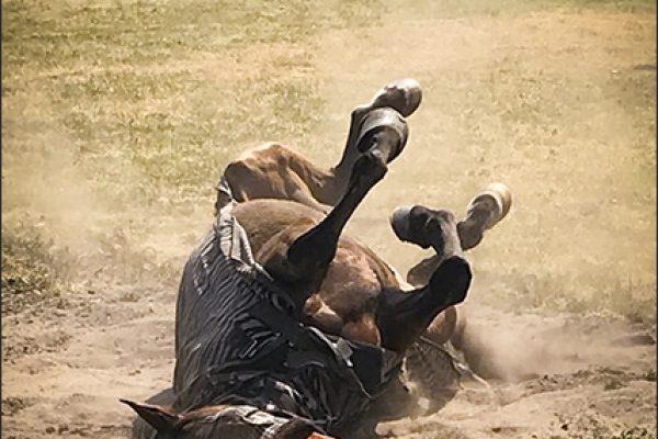 vakantiepaarden01kl